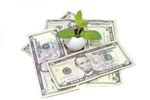 dollars-with-mint-plant-min